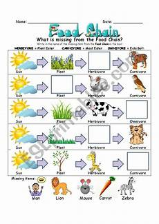 food chain worksheet esl worksheet by slvrwolf