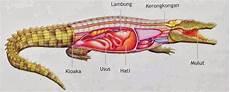 Comparativa Digestsystem Hewan Inti Sari Biologi