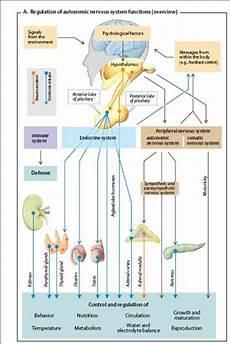 Anatomi Dan Fisiologi Sistem Endokrin D A Fakhrina