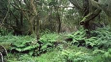 wald der elfen foto bild landschaft natur bilder auf