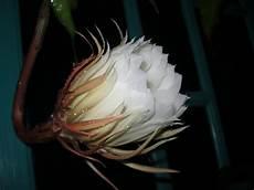Dunia Ulia Bunga Wijaya Kusuma