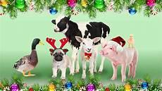 merry christmas from animals australia vimeo