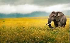 animal en g 30218 las mejores fotos de animales en hd u n l i m i t e d 3djuegos
