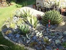 giardini piante grasse per esterno aiuola di piante grasse fk37 187 regardsdefemmes