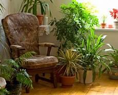 wie pflanzen und luftbefeuchtungsger 228 te in der winterzeit