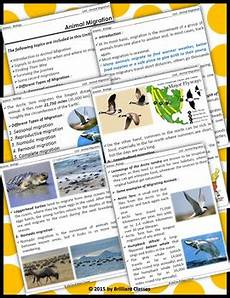 animal migration worksheets 14057 animal migration unit with worksheets tpt