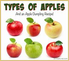 21 types of apples and an apple dumpling recipe
