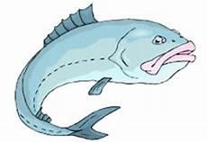 Malvorlagen Fische Hecht Malvorlagen Fische Ausdrucken