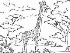 printable giraffe coloring pages malvorlagen
