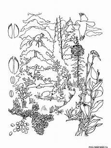 раскраска лес malvorlagen tiere malvorlagen wald