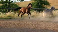 alte vasen schätzen wie viel kosten pferde was kostet ein eigenes pferd teil