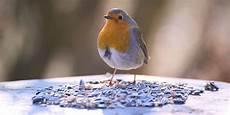 vogelwelt im eigenen garten vogelfotografie sch 246 ne schnappsch 252 sse gartenv 246 geln