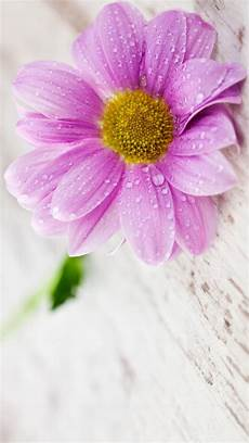 flower wallpaper for phone screen flower wallpapers for mobile phones with 1440x2560 and 5