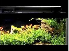 20 gallon long aquarium petco