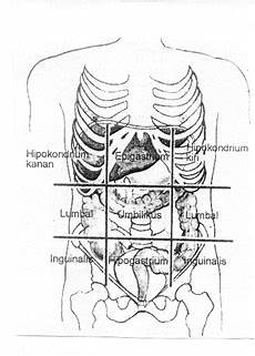 Tinjauan Anatomi Struktur Tubuh