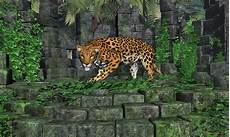 jungle ruins jaguar digital art by walter colvin