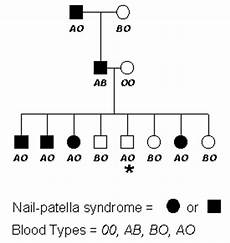 Prepare A Pedigree Chart For Blood Group Genetic Linkage