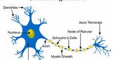 Anatomi Fisiologi Berbagi Informasi Mengenai Ilmu