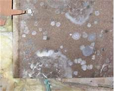 schimmel auf holz entfernen gallery of brauner befllt