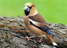 bilder quiz k 246 nnen sie diese vogelarten bestimmen