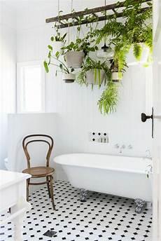 plante verte pour salle de bain 1001 id 233 es pour votre plante pour salle de bain