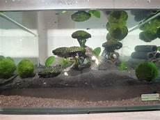Tutorial Garnelen Aquarium Einrichten Teil 1