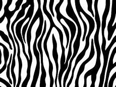 Zebra Print Designs
