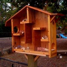 squirrel houses plans best 25 squirrel feeder ideas on pinterest what does