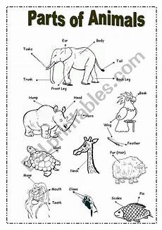 animal parts worksheets esl 14296 parts of animals picture dictionary esl worksheet by majocasciaro