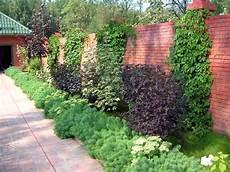 Welche Pflanzen Als Sichtschutz - deko ideen welche pflanzen als sichtschutz f 252 r garten und