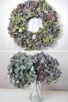 Wie Trocknet Hortensien - how to naturally hydrangeas hydrangea gardens and