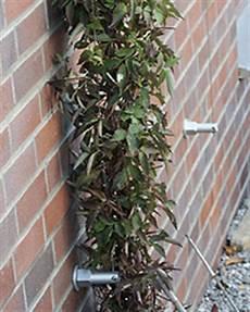 Rankhilfen Für Kletterpflanzen - kletterpflanzen rank und kletterhilfen