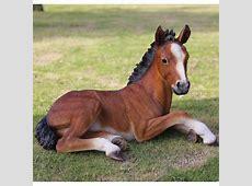 Hi Line Gift Ltd. Large Laying Down Horse Colt Statue