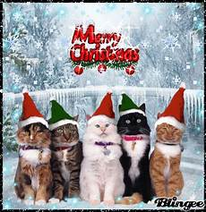 merry christmas from some cute cats picture 127173320 blingee com