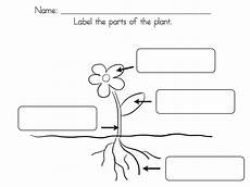 parts of the plants worksheets for grade 1 13716 cycle activities learning at the primary pond