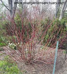 how to prune type shrubs simply and easily