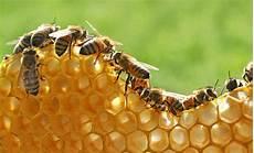 Sarang Lebah Jenis Produk Manfaat Dan Ciri Cirinya