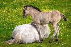 gl 252 ckliche pferde schottland fotografie und reise