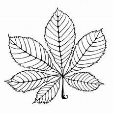 malvorlagen list chestnut leaf stock vector illustration of growth