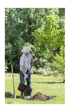 quand planter des arbustes planter un arbre fruitier