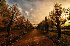 Nature Path 4k Wallpaper by Autumn Trees Path Hd Nature 4k Wallpapers Images