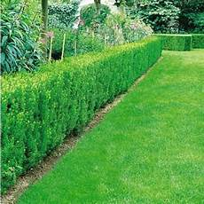 die hecke natuerlicher zaun und sichtschutz die 12 besten heckenpflanzen hecke pflanzen
