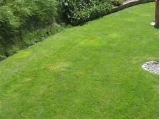 Rasen Gelb Nach Winter - genug braune flecken auf dem rasen nq62 casaramonaacademy