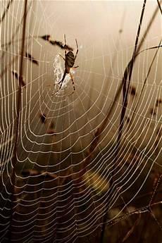 spider iphone wallpaper spider web iphone wallpaper idesign iphone