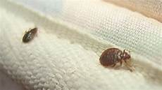 punaises de lit astuces pour s en d 233 barrasser grands