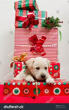 merry christmas portrait of cute labrador puppy for christmas gift 89399821
