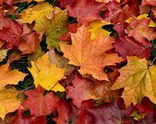 Résultat d'images pour image automne
