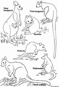 australia animals coloring pages 16900 australian colour in printables search guides animals printables