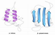 alpha helices and beta pleated sheets are exles of