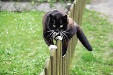 Was Tun Gegen Katzen Im Garten - 196 rger mit nachbars katze mein sch 246 ner garten